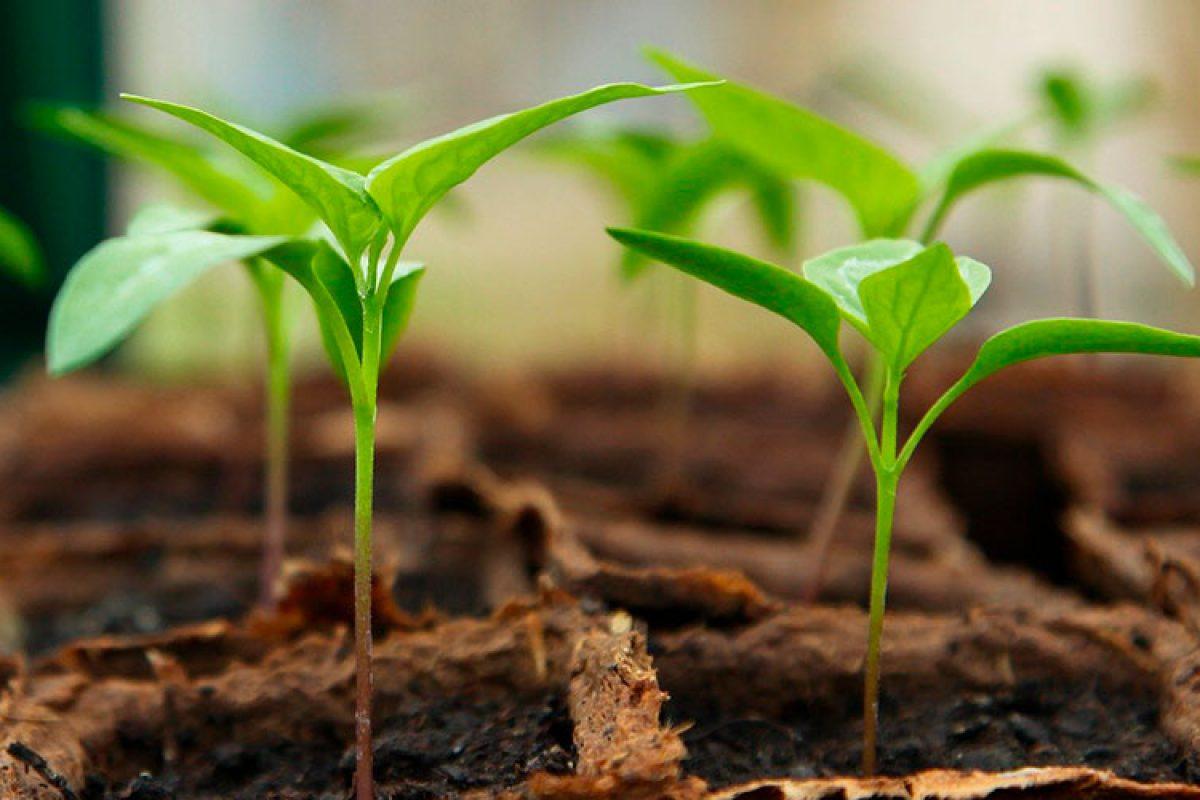Kit de Iniciación de Cultivo