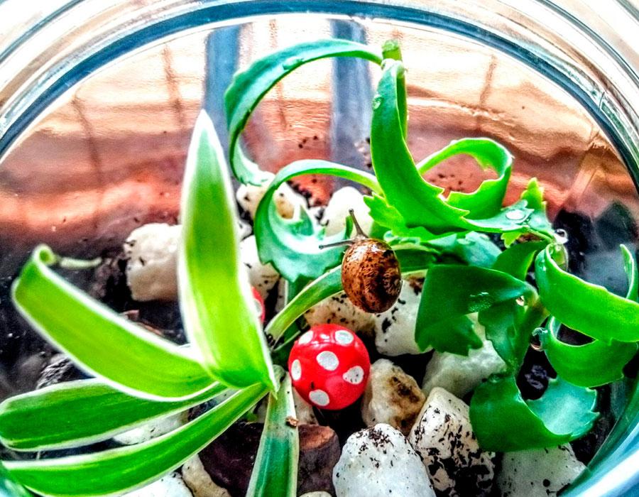 jardin-minimo-en-vidrio